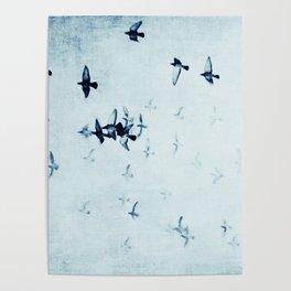 birds II Poster