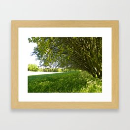 A Shady Spot Beneath the Trees  Framed Art Print