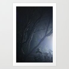 forest mystery Art Print
