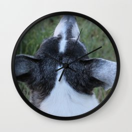 An Old Wise Dog Nose Wall Clock