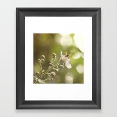 Busy Little Bee Bum Framed Art Print