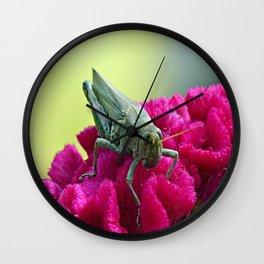 Grasshopper on Cockscomb Wall Clock
