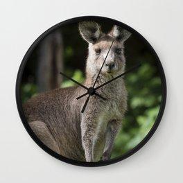 Eastern Grey Kangaroo Wall Clock