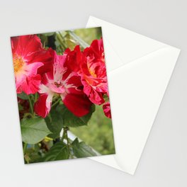 Roses in Bloom 2 Stationery Cards