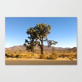 Joshua Tree 003 Canvas Print
