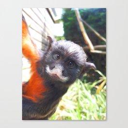 White-lipped tamarin monkey Canvas Print