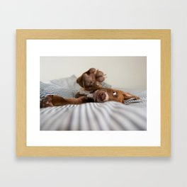 Puppy Reaching with Paw Framed Art Print