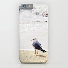Solitary Gull iPhone 6s Slim Case