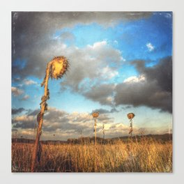 Field of lost Souls - Withered Sunflowers Canvas Print