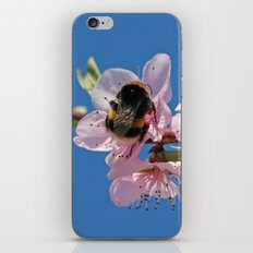 Bumblebee and Peach Blossom iPhone & iPod Skin