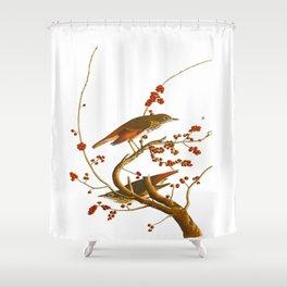 Hermit Thrush Bird Shower Curtain