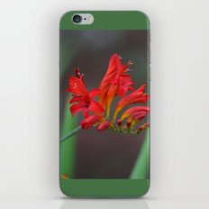 Red Flowers 2 iPhone & iPod Skin