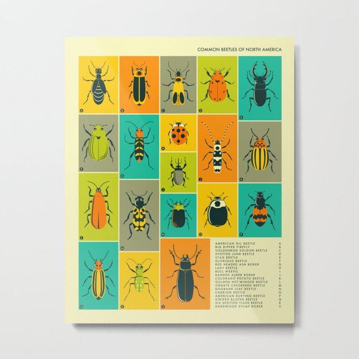 COMMON BEETLES OF NORTH AMERICA Metal Print