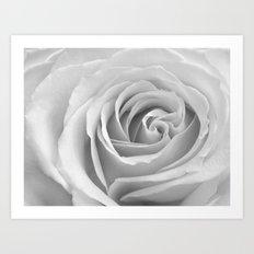 'Rose' Art Print