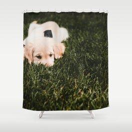 Cute puppy by Drew Hays Shower Curtain