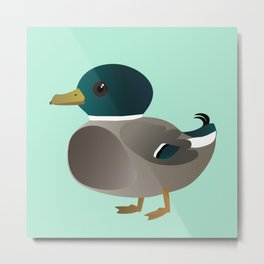Cute male mallard Metal Print