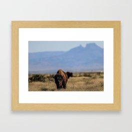 Bufalo, Bisonte, landscape Framed Art Print