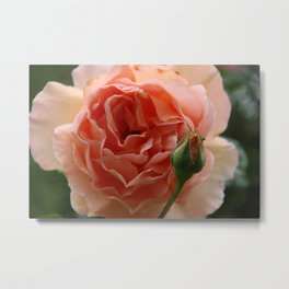 Rose with a baby Metal Print