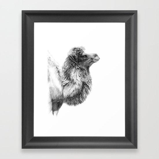 Bactrian Camel G079 Framed Art Print