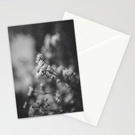 Black & White (2) Stationery Cards