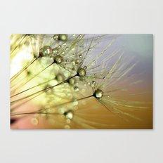 Dandelion & Droplets Canvas Print