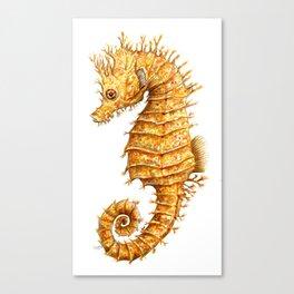 Sea horse, Horse of the seas, Seahorse beauty Canvas Print