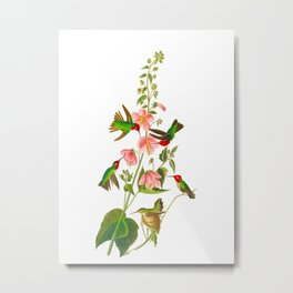 Columbian Hummingbird Metal Print