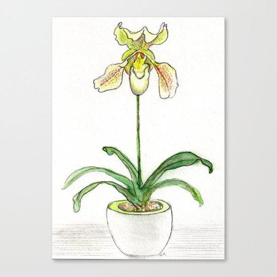 Slipper Orchid Canvas Print