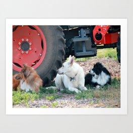 Farm Dogs Art Print