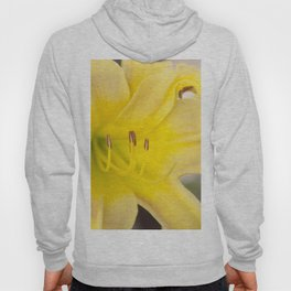 Yellow Blooming Canna Flower Nature Floral Fine Art Framed Lustre Wall Art Print  Hoody
