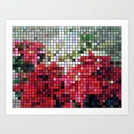 Mixed color Poinsettias 3 Mosaic Art Print