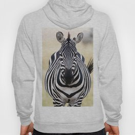 Zebra looking at you Hoody