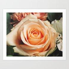 Romantic Rose Pink Rose Art Print