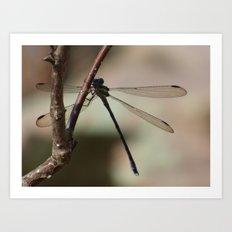 dragonfly 2016 X Art Print