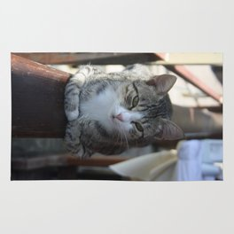 Cute Tabby Cat - Sitting On The Fence Rug