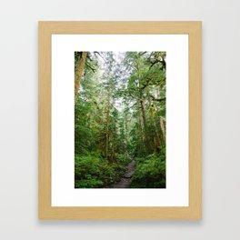 Traipse Among the Forest Framed Art Print