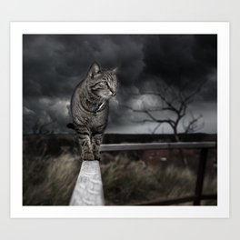 Cat on the Prowl Art Print