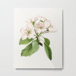 Vintage pear flowers Metal Print