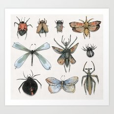 Entomology Art Print