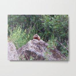 Groundhog on a Rock Metal Print