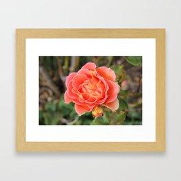 Mum and Bub Rose Framed Art Print
