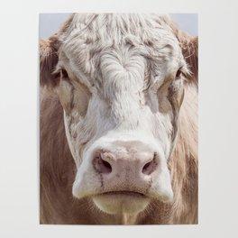 Animal Photography | Cow Portrait Colour | Minimalism | Farm Animals Poster