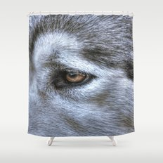 Eye of the dog Shower Curtain