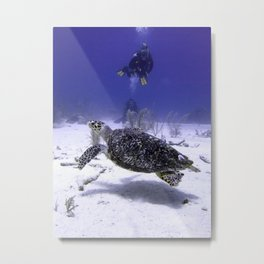 Divers Watching Hawksbill Turtle Metal Print