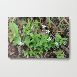 Many Mini Wildflowers Metal Print