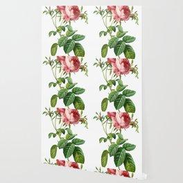 Vintage Rose - Redoute's Rosa Centifolia Foliacea Wallpaper
