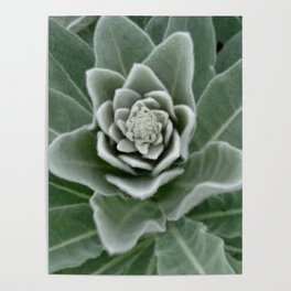 Golden Ratio in a Wild Weed Poster
