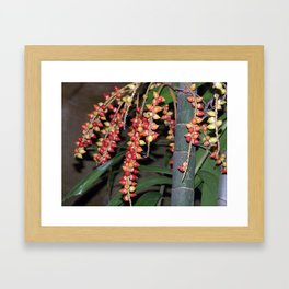 coffee plant (Bali, Indonesia) Framed Art Print