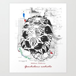 Natura Technica - Radiated Tortoise Art Print