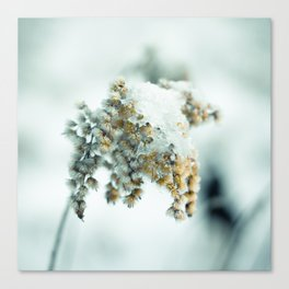 Frost & beauty Canvas Print